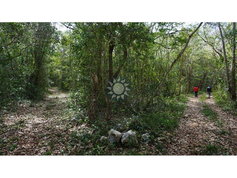 cenote en venta en xocen yucatan