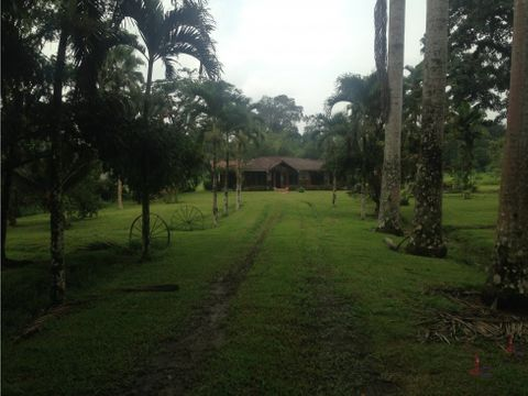 jc vende finca de palma productiva puerto quito