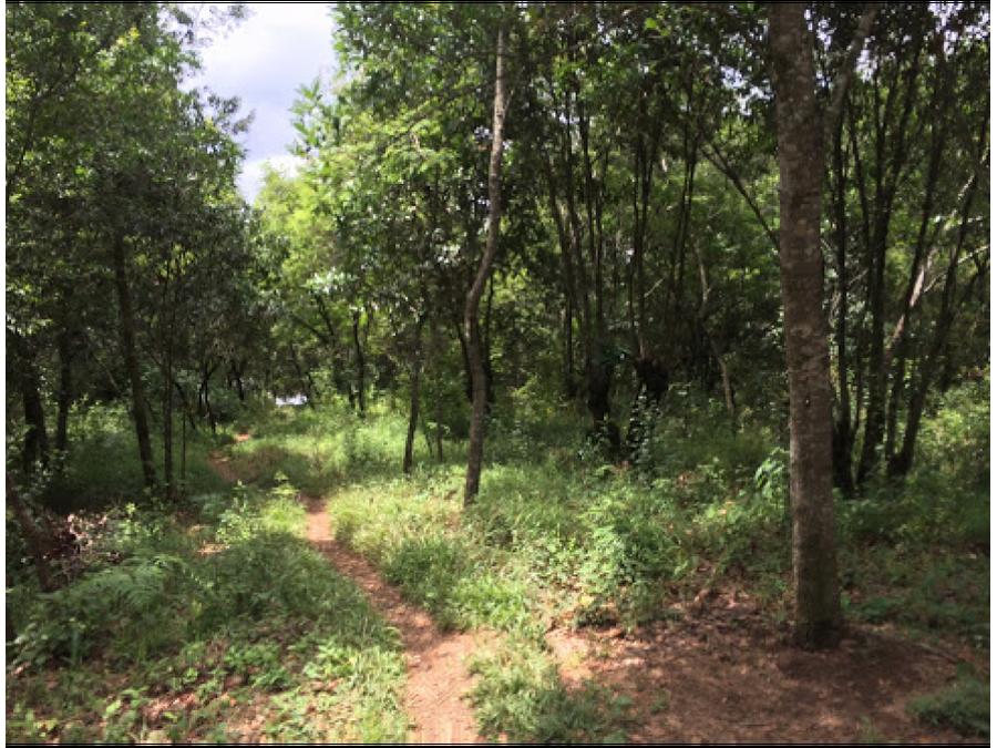 terreno en venta en foresta de cayala zona 16 c1