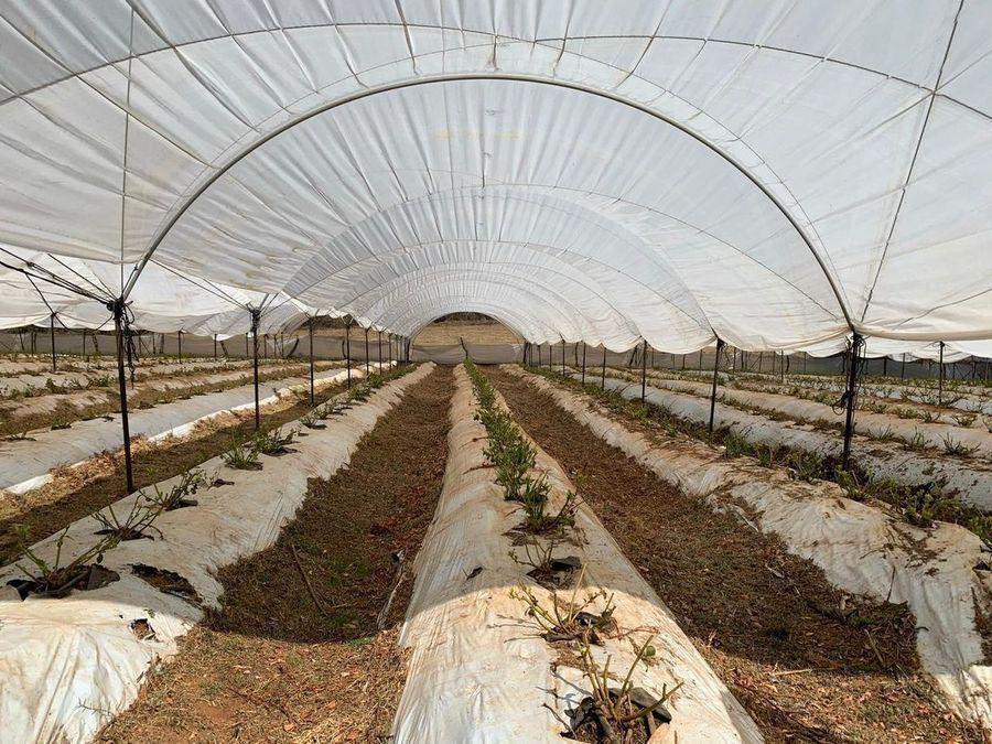 se vende terreno para cultivo en invernadero acuitzio madero mich