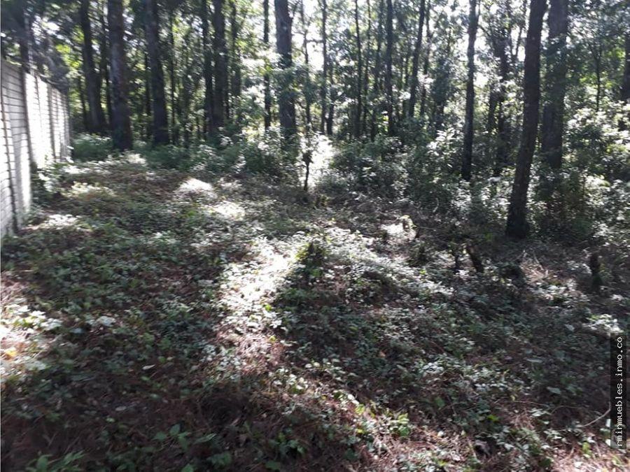 vendo terreno en bosque vivo