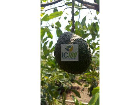 venta finca de aguacate en amatitlan guatemala
