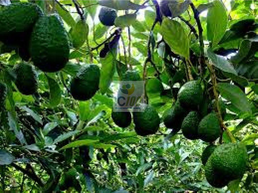 venta finca de aguacate chimaltenango guatemala