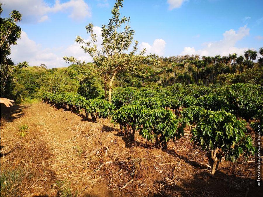 terreno finca 13000 mts planos con casa y cafe
