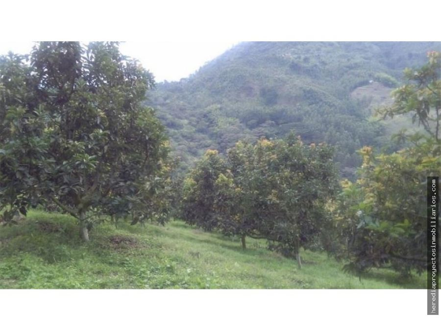 venta finca de produccion en genova armenia