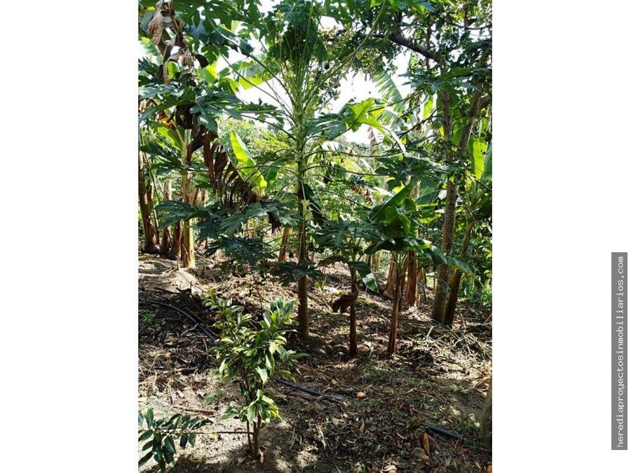venta permuta finca sector hojas anchas circasia