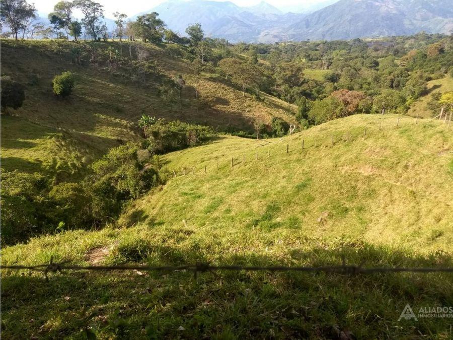 finca en tarso de produccion con un area de 8 ocho hectareas