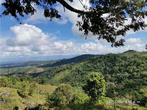 se vende bosque natural en sierpe osa 105 hectareas finca
