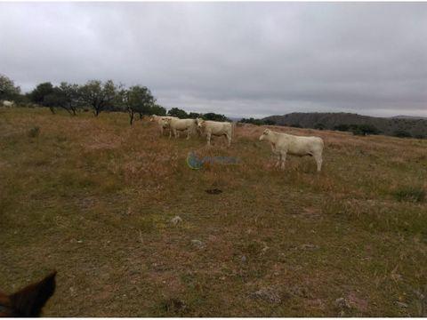 se vende hermoso rancho ganadero en satevo
