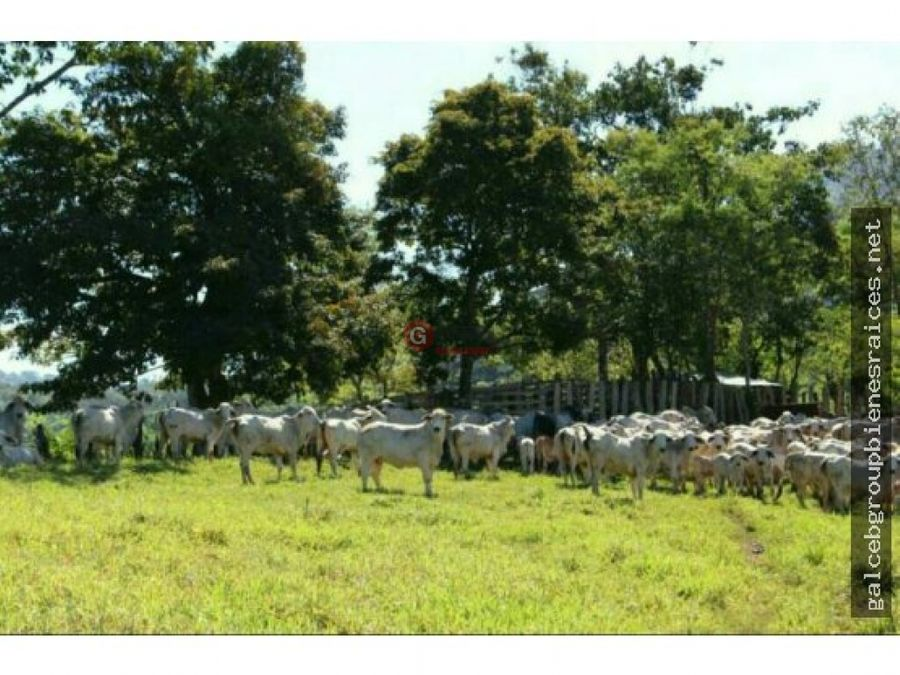 87 hectareas gualaca a 15 mil la hectarea