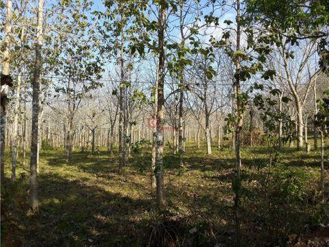 el espino 86763 m2 1 hect forestada