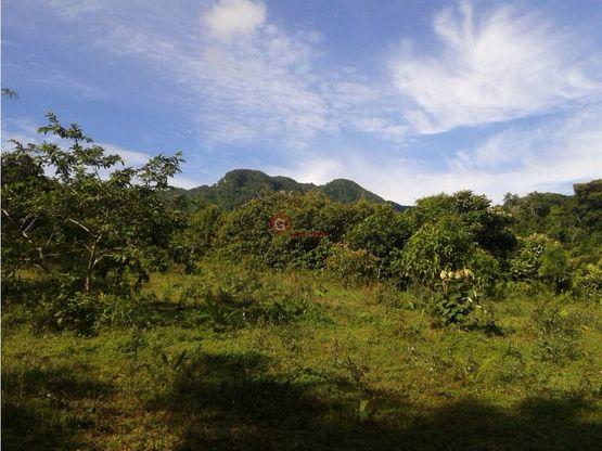 cocle penonome finca 100 hectareas en venta