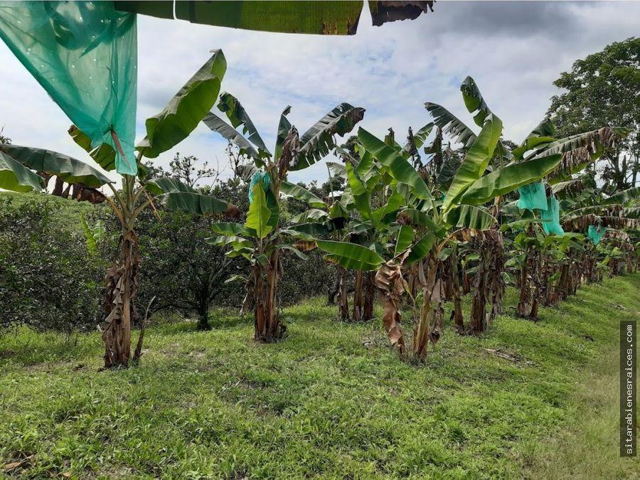 se vende finca agricola en pueblo tapao