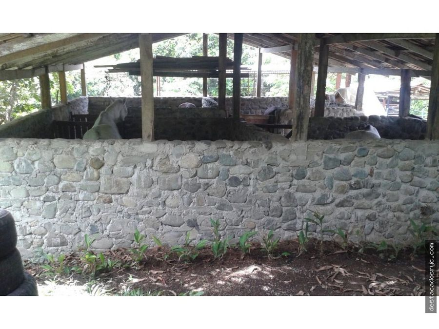 finca en venta en tamesis antioquia
