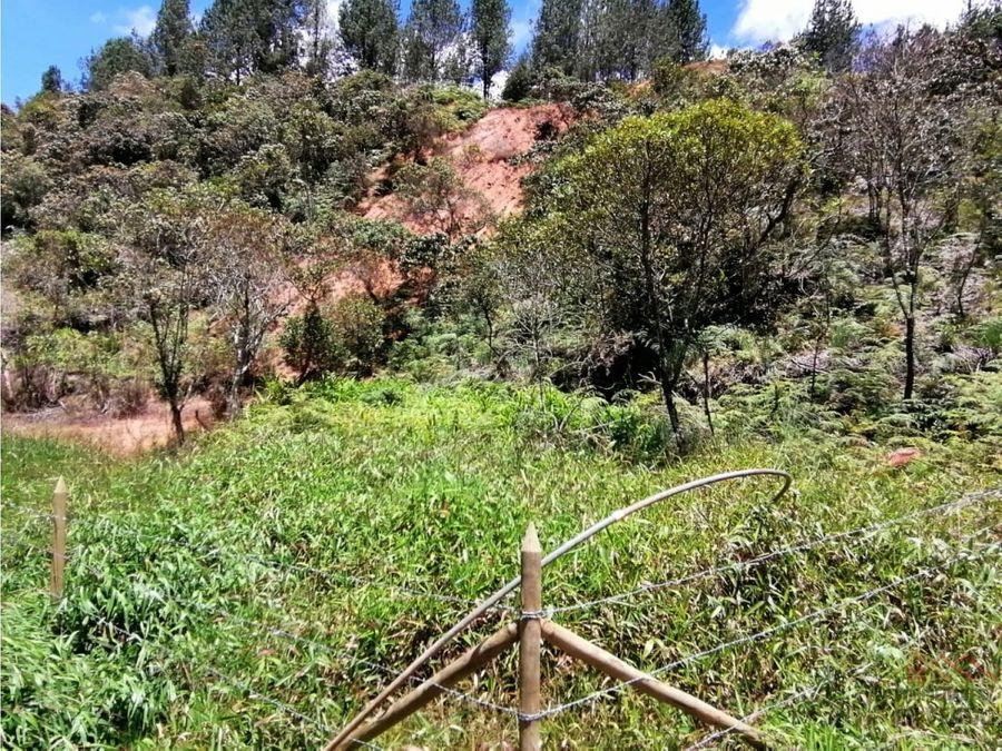 lote en venta con bosque y explanacion sector el porvenir san vicente
