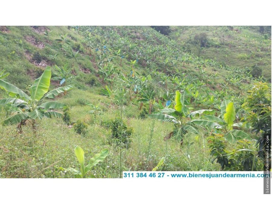 finca bananera y frutales en caicedonia valle
