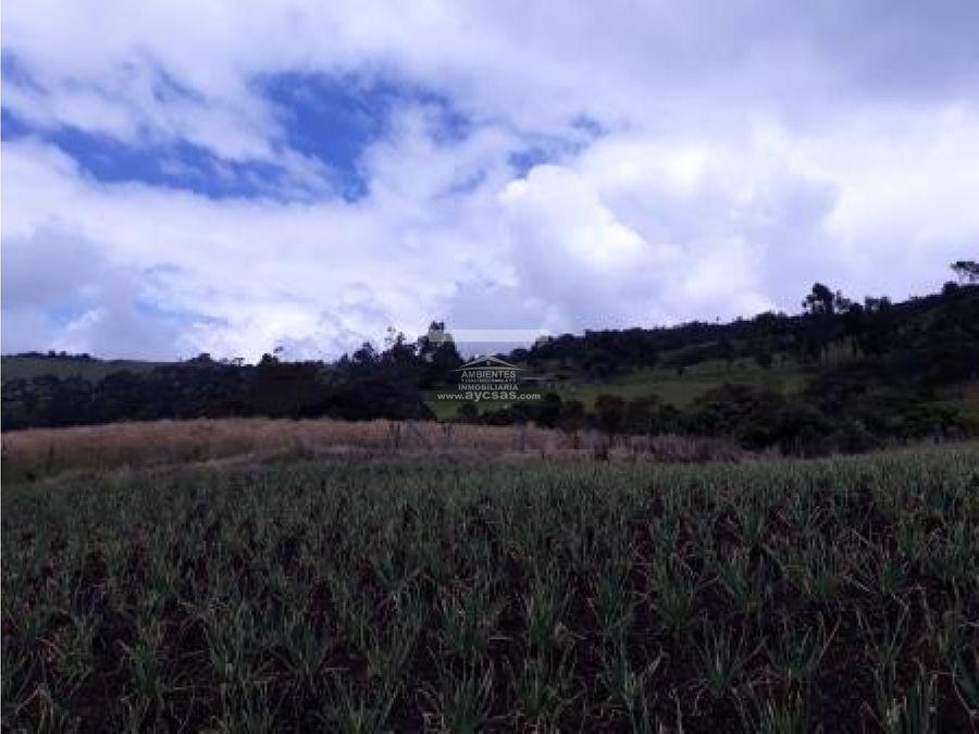 vendo finca en tulua corregimiento santa lucia