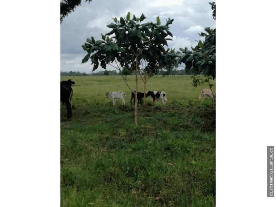 venta finca guamal meta excelntes tierras 24 hectareas