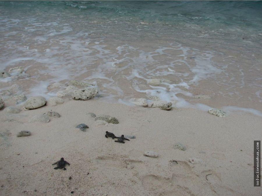 beautiful beachfront land in tankah tulum