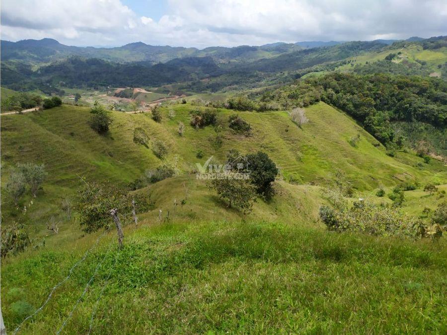 finca de 6 hectareas en san roque con buenos potreros