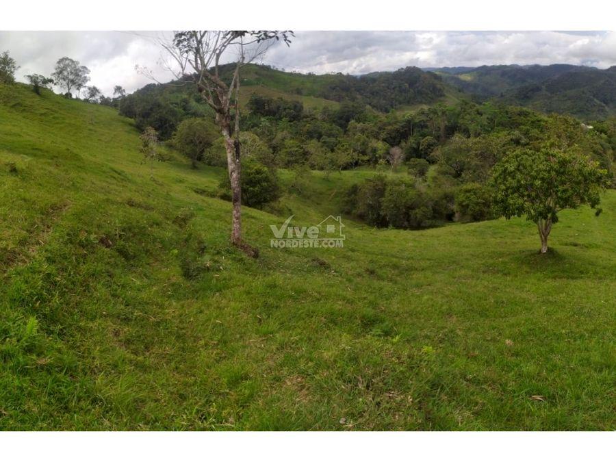 finca de 10 hectareas con cana cafe potreros y agua
