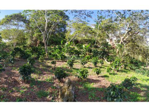 finca de 9 hectareas con 5mil arboles de cafe potreros cana y agua