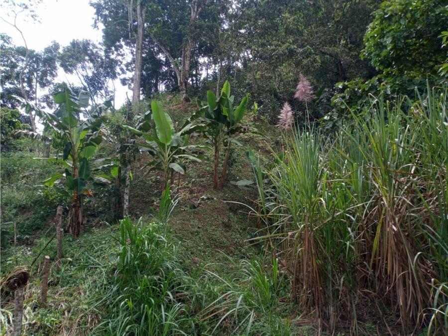 finca de 20 hectareas con cafe peseras y potretos en san roque ant
