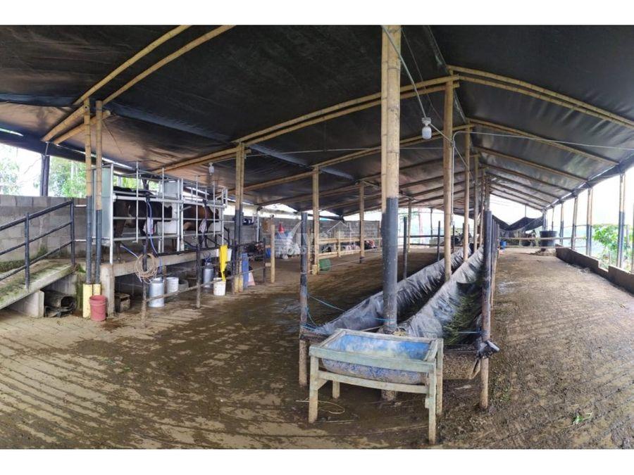 lecheria con 14 vacas jerjol y gyrolandas en san roque ant