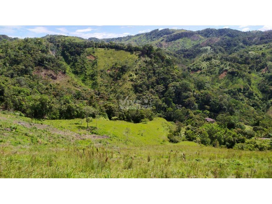 18 hectareas con potreros 2 nacimientos de agua y cafe