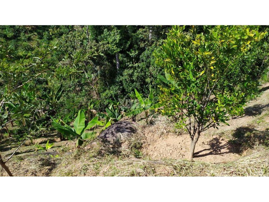 espectacular lote de 4000m2 con frutales en san roque ant