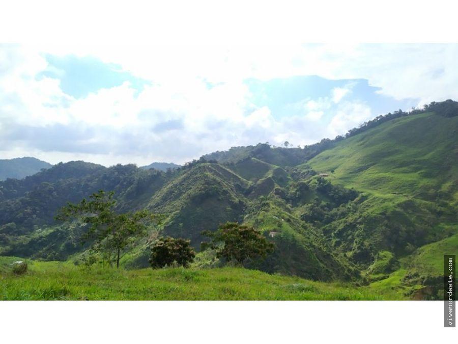 finca productora de 80 hectareas