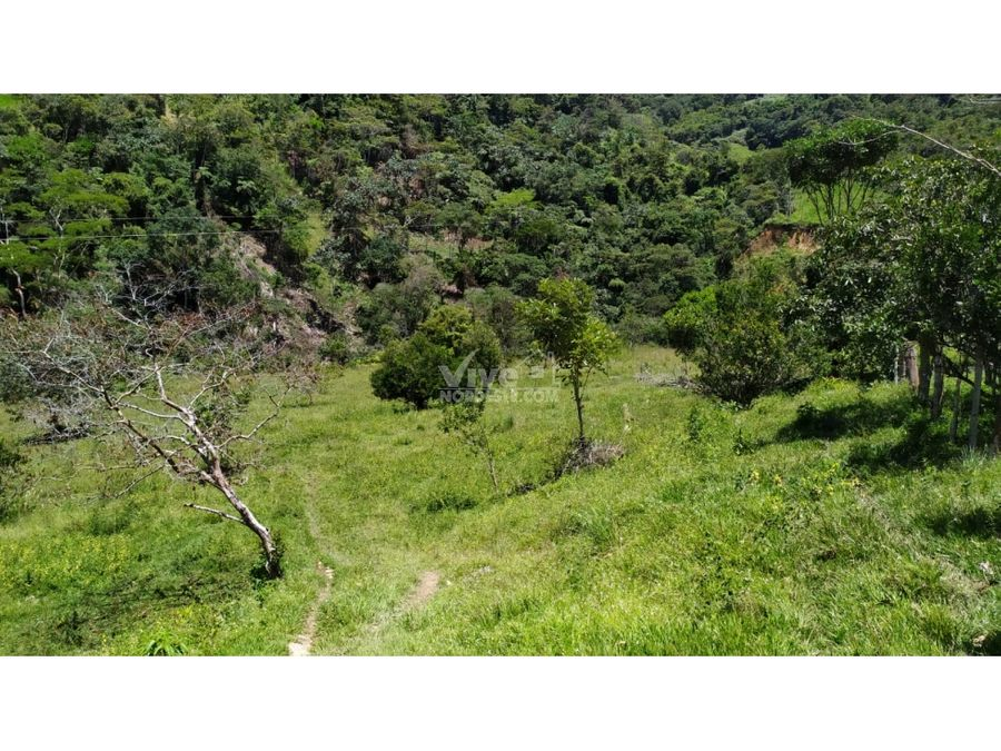 finca de 50 hectareas con rio cacao fique potreros y monte