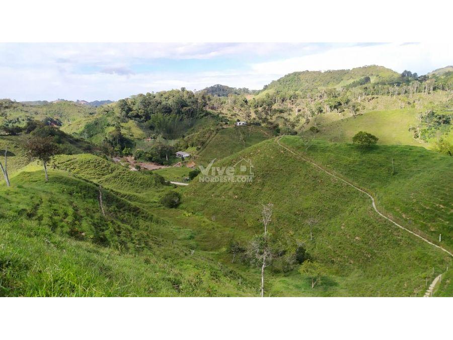 lecheria de 85 hectareas en san roque antioquia