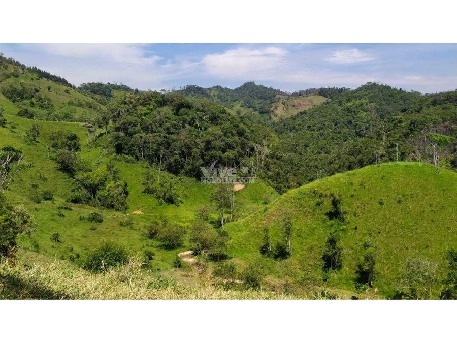 70 hectareas con potreros y aguas en san roque antioquia