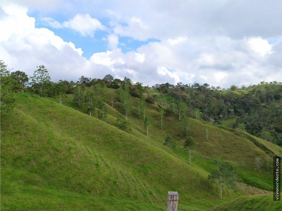 lote urbano de 7 hectareas en san roque antioquia