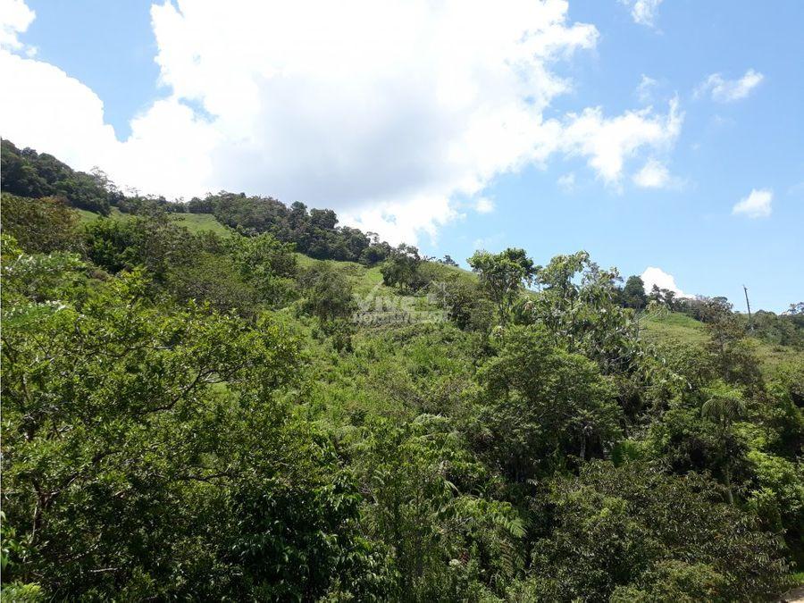 finca de 22 hectareas a borde de carretera en san roque ant