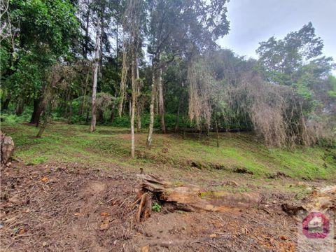 terreno en el encinal tronco 9