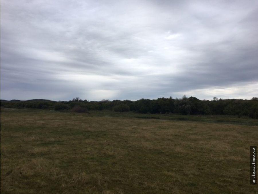 campo 132 hectareas