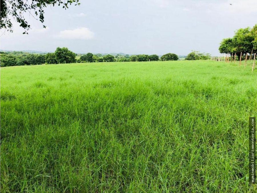 vende 72 hectareas en san pelayo