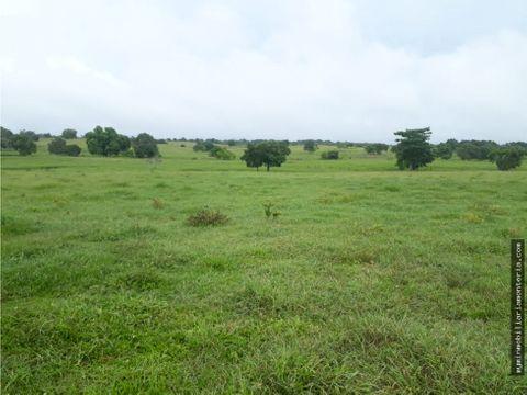 vende finca de 116 hectareas en sahagun