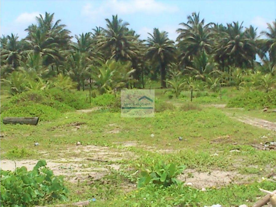 terrenos lotizado en muisne desde 165 m2