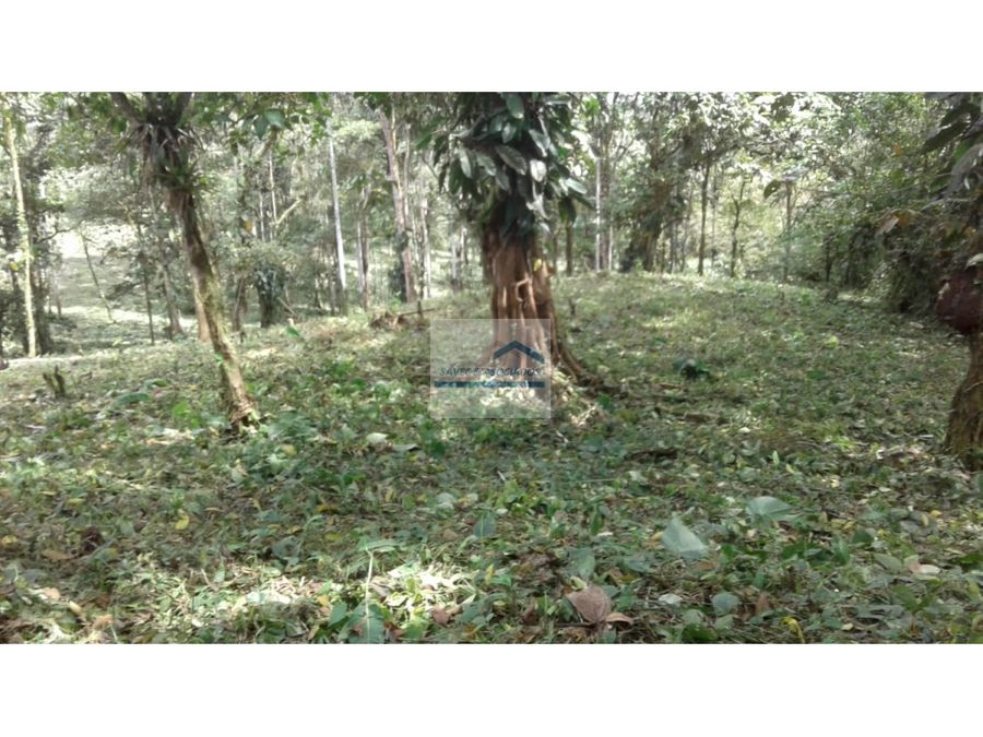 hermosa finca 20 hectareas san miguel de los bancos 210000