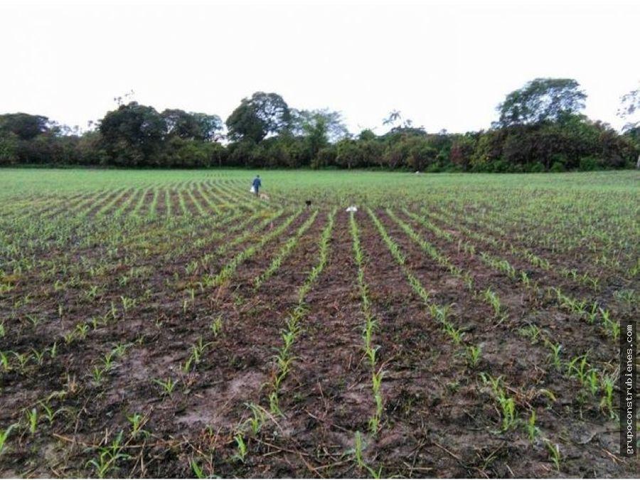 hacienda ideal agua para siembra en balzar guayas