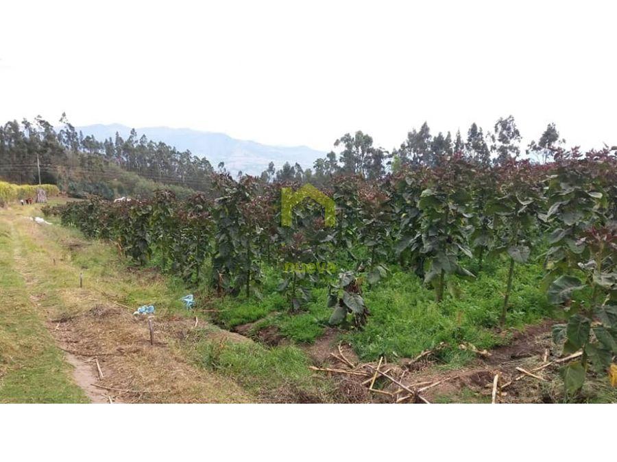 vendo quinta de 5 hectareas en atuntaqui