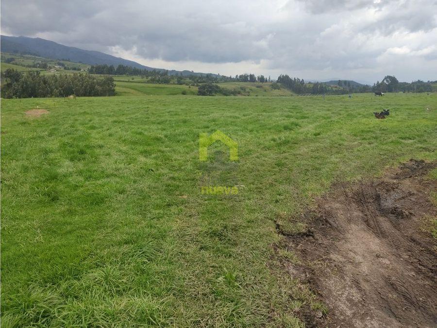una hectarea plana a la pana via cayambe olmedo