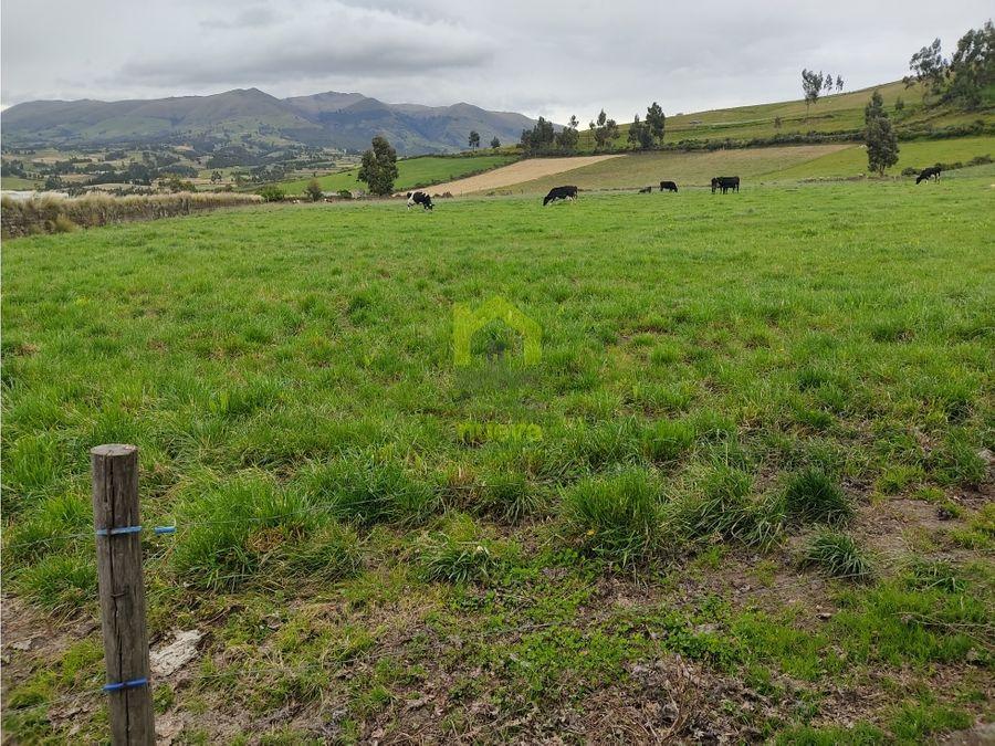 tres hectareas en pesillo olmedo