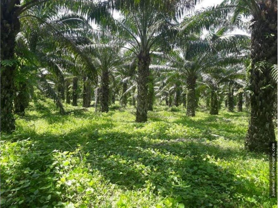 venta finca de palma aracataca