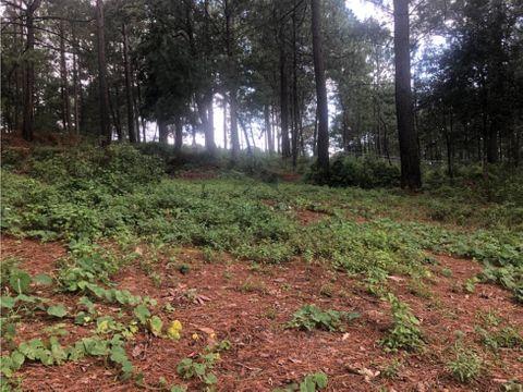 terreno boscoso en venta en valle de bravo