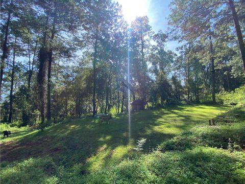 terreno a la venta inmerso en el bosque rodeado de naturaleza