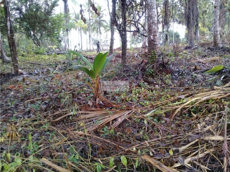 vendo lote en nuqui pangui en el pacifico colombiano
